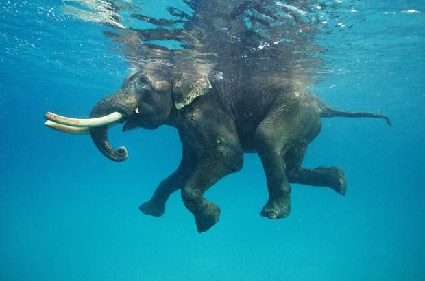 slon se brcka