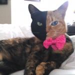 Upoznajte Venus: Fenomenalnu mačku sa dva lica!