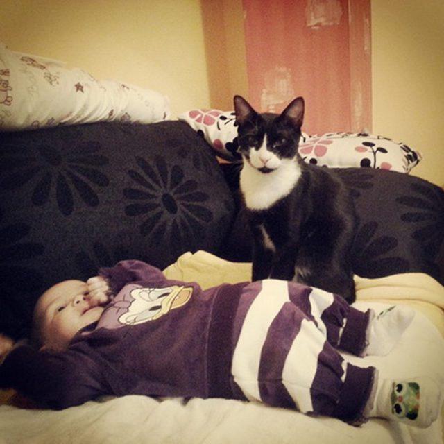 maca nebojsa cuva bebu