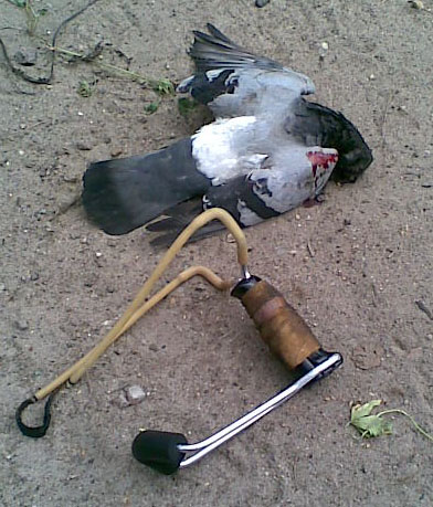 ubijen golub