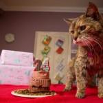 Upoznajte Popi – zvanično najstariju mačku na svetu!