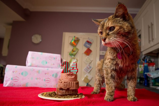 najstarija macka na svetu