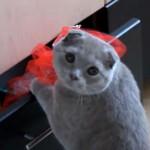 VIDEO: Mačka pokušava da ukrade nešto iz fioke, a kada shvati da je gledaju ona…