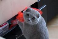 macka krade iz fioke