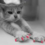 """OSMISLILI SRBI, OSVOJILI REGION: """"Šik šape"""" koje će spasiti mačku i sačuvati vaš nameštaj!"""
