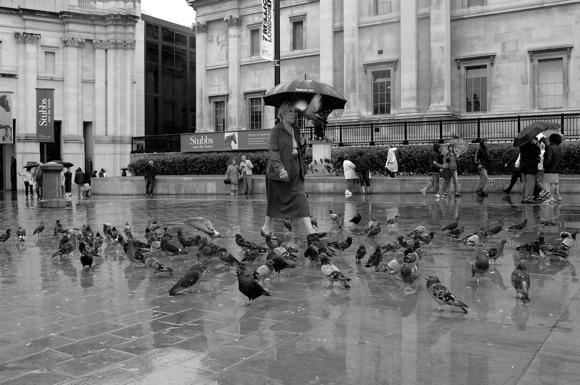 golubovi na kisi