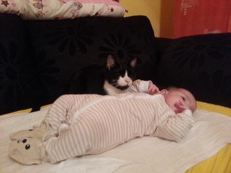 macak nebojsa cuva bebu