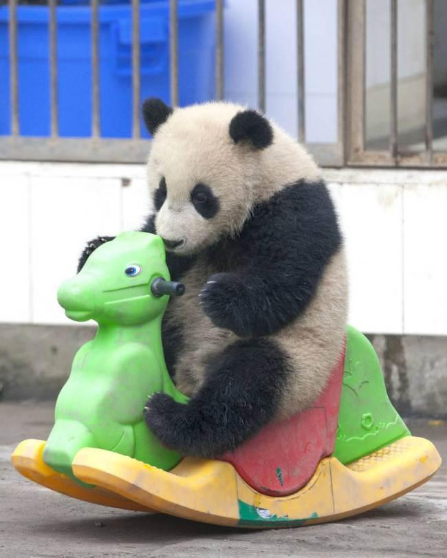 nespretni panda