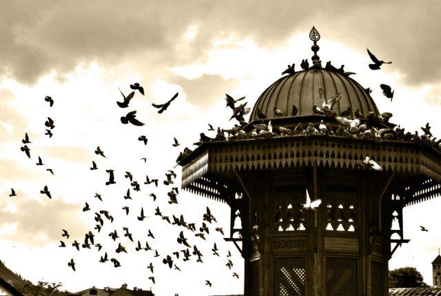 golubovi sarajevo