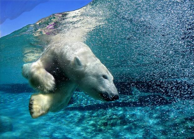 zivoinju uzivaju u plivanju petface