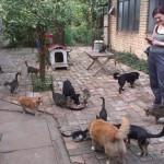 """Zavirite u """"Kuću Milosti"""" u Zrenjaninu: Ovde živi 16 mačaka, 8 mačića, 7 pasa i 1 petao!"""