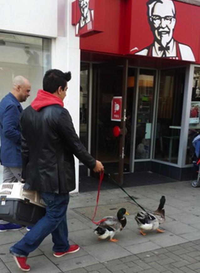 patke setaju centrom Londona