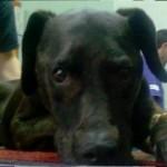 KRALJEVO: Deca noćima, u smenama, dežurala pored otrovanog psa. Žuća je preživeo!