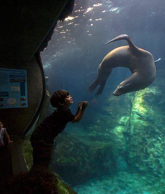 deca i morski lav2