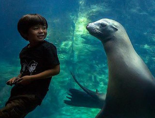 deca i morski lav