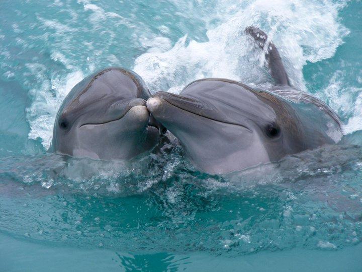 delfini i ljudi petface