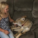 NEVEROVATNO: Osmogodišnjoj devojčici najbolji prijatelj kojot!