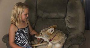 devojčici najbolji prijatelj kojot petface