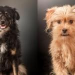 60 DANA ZA ŽIVOT: Ukoliko ne nađu dom, psi iz ove FOTO galerije biće eutanazirani!