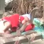 NEVEROVATNO: Kobre čuvaju dete!