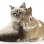 Kunići i mačke – dva (ne)prijatelja!