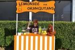 """BRAVO: Desetogodišnjak napravio virtuelni """"limunada štand"""" kako bi prikupio novac za orangutane u nevolji!"""