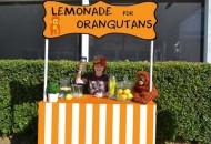 limunada za orangutane