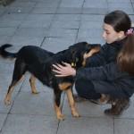 SJAJNO DETE: Marija (12), šeta pse i tako zarađuje džeparac, koji troši na napuštene životinje!