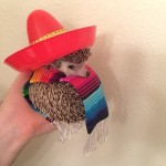 Upoznajte Bidija – najpoznatijeg ježa na svetu u koga ćete se odmah zaljubiti! (FOTO)