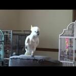 DNEVNA DOZA SMEHA KREĆE: Papagaj savršeno imitira Majkl Džeksona!