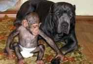 pas i simpanza prijatelji
