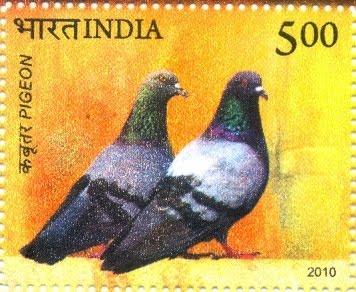 golubovi novcanice