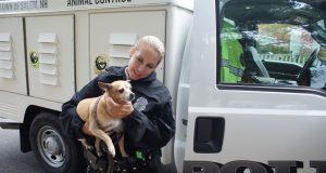 policije za životinje petface