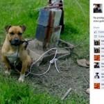 """SKANDALOZAN OGLAS IZ KRALJEVA: """"Prodajem psa, ubica, 14 pobede i 1 nerešen meč. 100 eura!"""""""