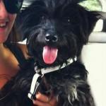 USPELI SMO: Uplakana Milena PRONAŠLA Neru – psa koji je ukraden pre 6 dana!