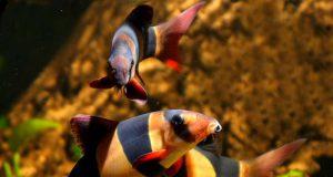 ribica-koja-jede-smece-petafce