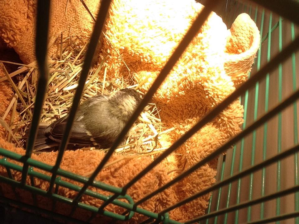 spasena ptica