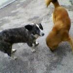 VRANJE: Dečaci (15) kamenicama gađali ulične pse! Marko ih zaštitio!