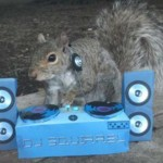 SJAJNO: Veverica, glavna cimerka u studentskom domu!