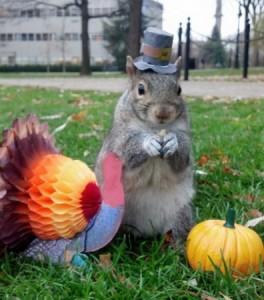 veverica na fakultetu