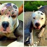 PRAVDA JE DOSTIŽNA: 15 i po godina zatvora zbog zlostavljanja psa!