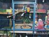 kavez za papagaje petface