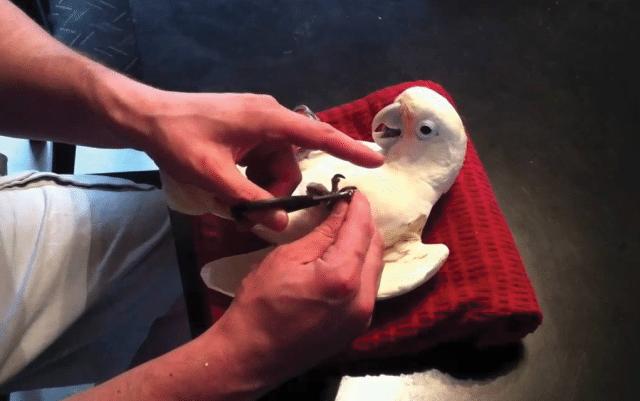 skracivanje noktiju petface