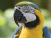 govor papagaja petface