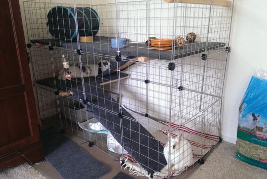 kavez za kuniće petface