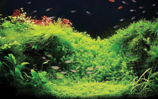 biljni akvarijum petface