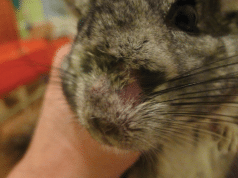 dermakomikoza petface