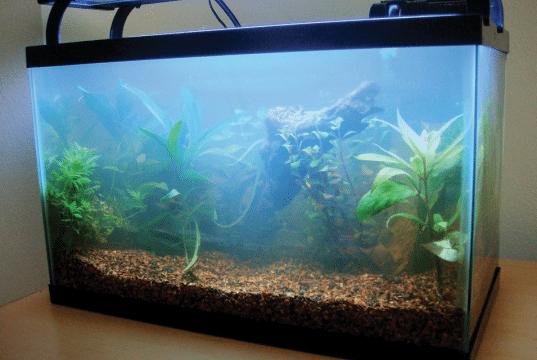 higijena akvarijum petface
