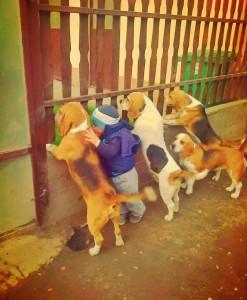psi i dete