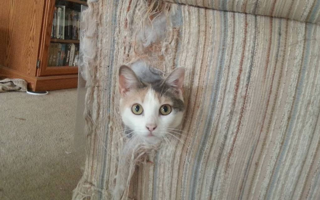 Grebalice za mačke: Kakve grebalice za mačke postoje?